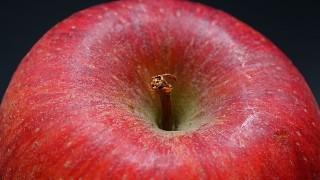 妊娠後期でりんご病?、、、じつは妊娠中期にも接触アリ